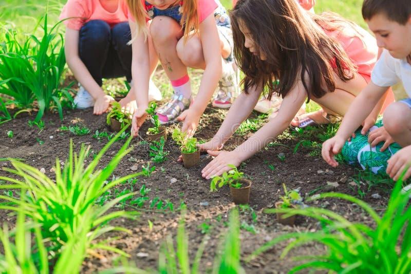 Las manos de los niños que plantan el árbol joven en suelo negro junto como el concepto del mundo de rescate fotografía de archivo