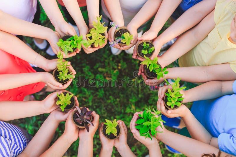 Las manos de los niños que plantan el árbol joven en suelo negro junto como el concepto del mundo de rescate foto de archivo libre de regalías