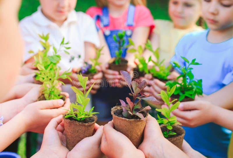 Las manos de los niños que plantan el árbol joven en suelo negro junto como el concepto del mundo de rescate imagen de archivo libre de regalías