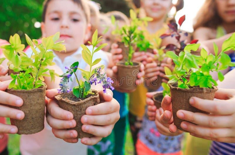 Las manos de los niños que plantan el árbol joven en suelo negro junto como el concepto del mundo de rescate fotografía de archivo libre de regalías