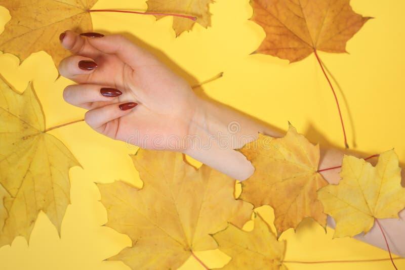 Las manos de las mujeres hermosas en el fondo amarillo de papel, concepto del cuidado de la mano del otoño fotos de archivo