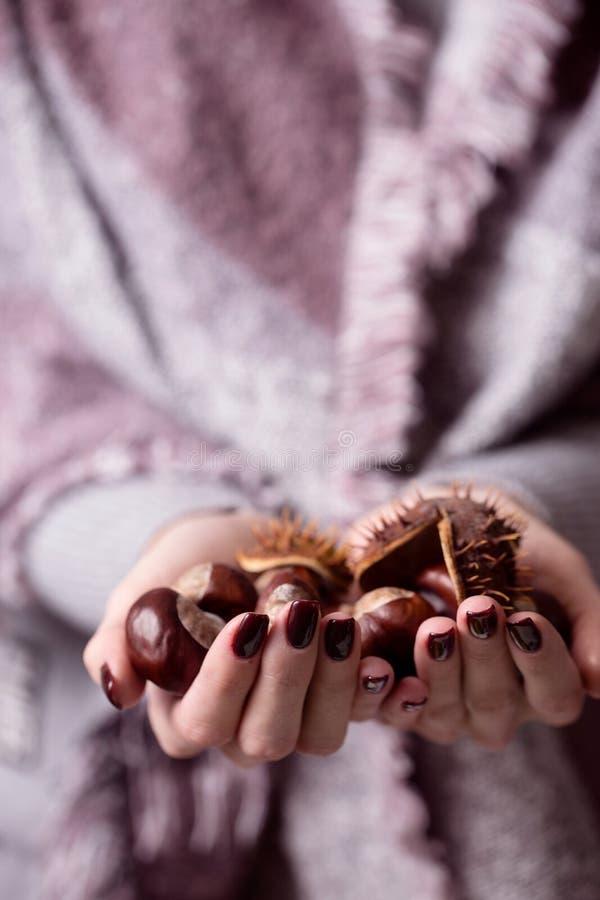 Las manos de las mujeres sostienen las castañas espinosas imagen de archivo