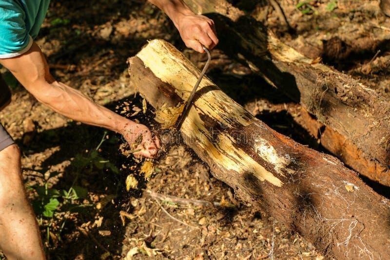 Las manos de un carpintero planearon la madera, lugar de trabajo foto de archivo libre de regalías