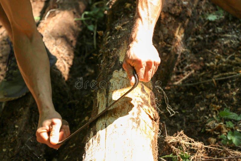 Las manos de un carpintero planearon la madera, lugar de trabajo foto de archivo