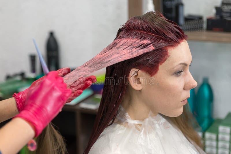 Las manos de un peluquero en guantes rojos teñen el filamento del pelo del rojo de la muchacha del cliente foto de archivo libre de regalías
