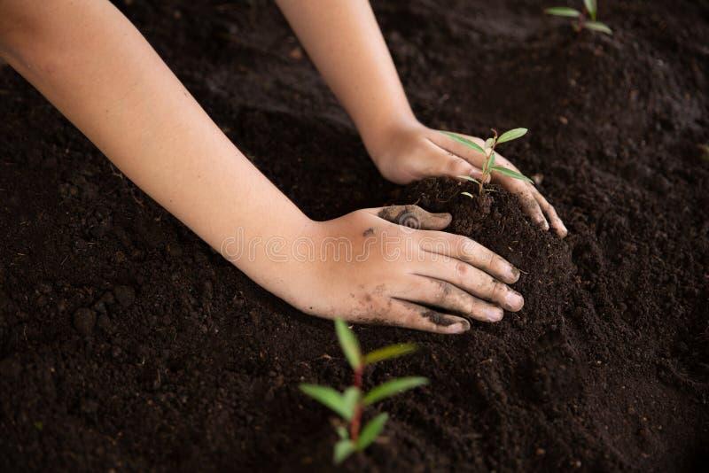 Las manos del niño que sostienen y que cuidan una planta verde joven, almácigos están creciendo del suelo abundante, plantando ár imágenes de archivo libres de regalías