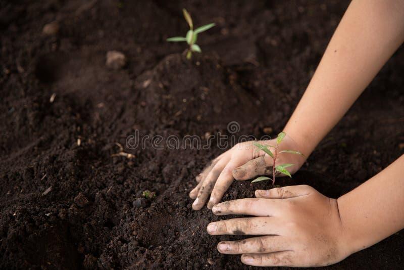 Las manos del ni?o que sostienen y que cuidan una planta verde joven, alm?cigos est?n creciendo del suelo abundante, plantando ?r fotografía de archivo libre de regalías