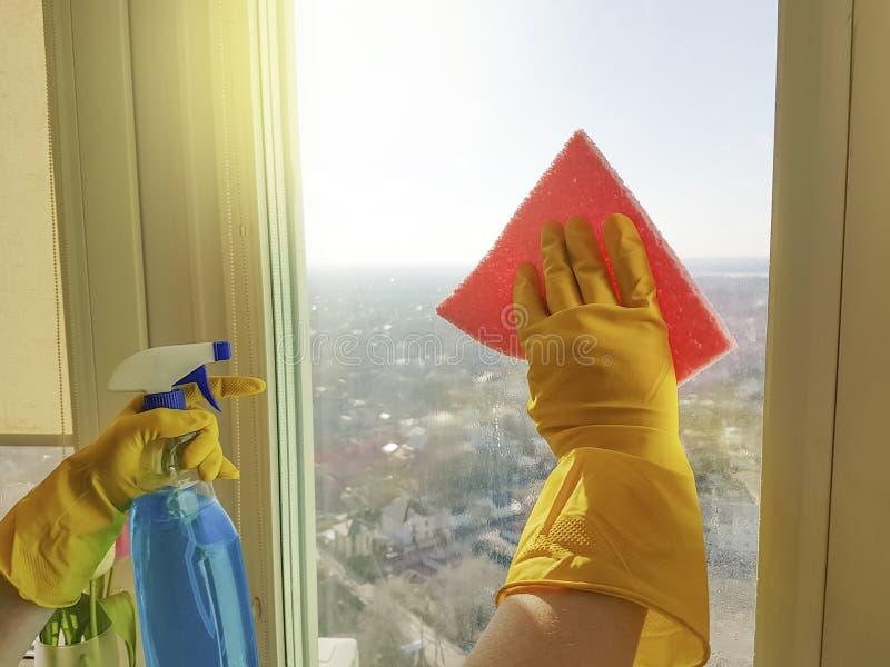 Las manos del ` s de las mujeres lavan la ventana, mantienen la limpieza detergente del hogar de la lavadora imagen de archivo libre de regalías
