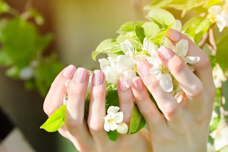 Las manos femeninas con el manzano florecen, manicura Cierre para arriba fotografía de archivo