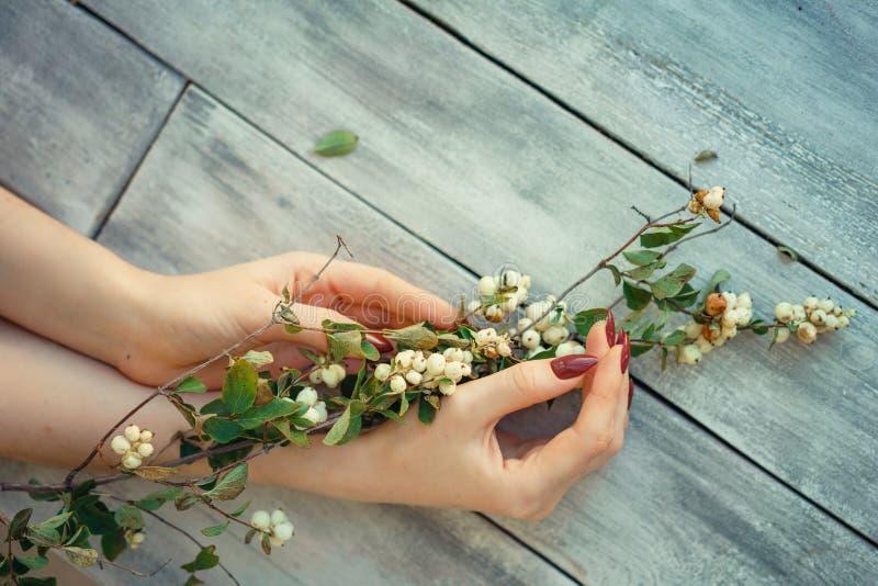 Las manos femeninas hermosas mienten con las flores en el fondo de madera, cuidado de piel de la mano, manicura hermosa imágenes de archivo libres de regalías