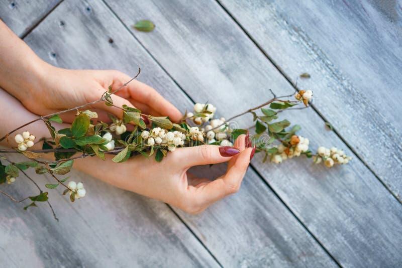 Las manos femeninas hermosas mienten con las flores en el fondo de madera, cuidado de piel de la mano, manicura hermosa foto de archivo libre de regalías