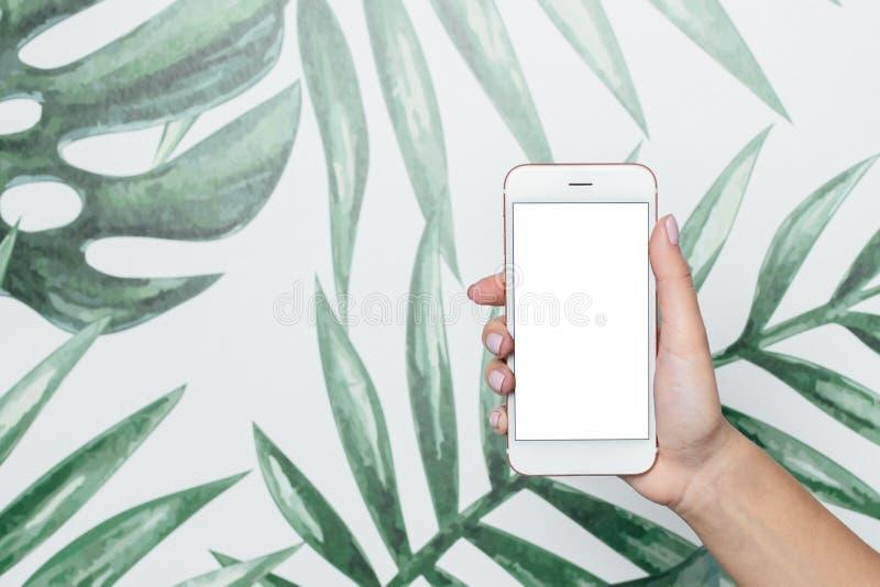 Las manos femeninas sostienen el teléfono móvil con la pantalla blanca en un fondo tropical fotos de archivo