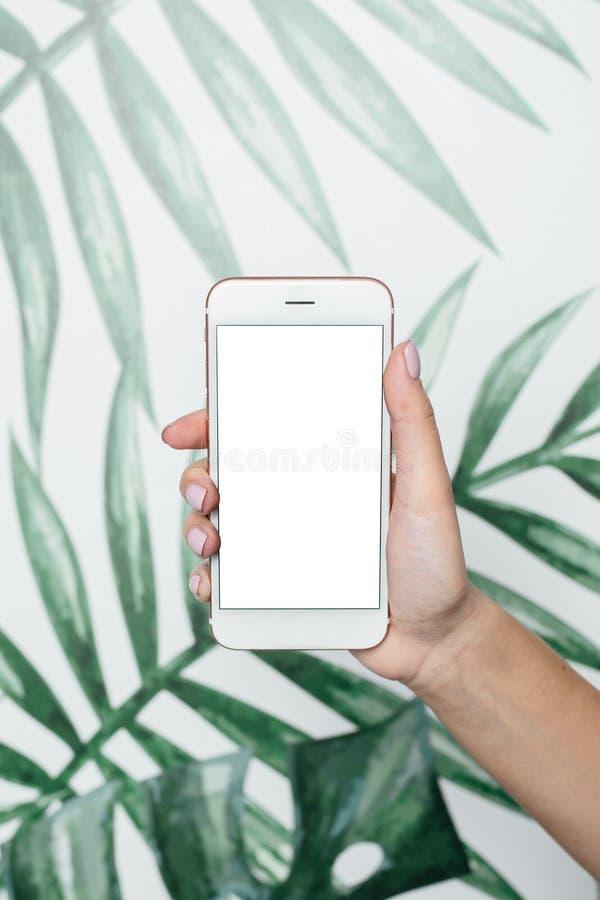 Las manos femeninas sostienen el tel?fono m?vil con la pantalla blanca en un fondo tropical fotos de archivo