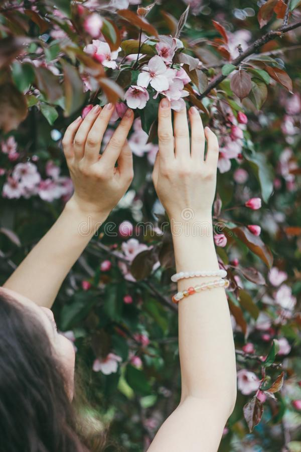 Las manos hermosas de las mujeres tocan las flores rosadas de Apple floreciente t fotografía de archivo