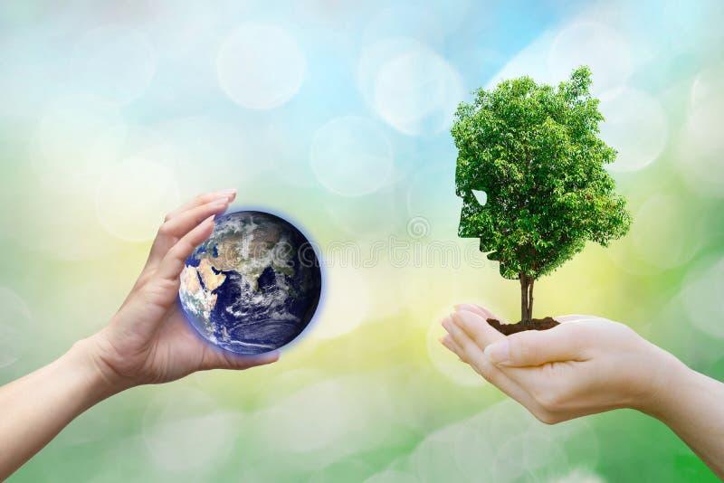 Las manos humanas del concepto de la ecología que sostienen el árbol grande de la cara de la planta miran el ambiente mundial, im imagen de archivo libre de regalías