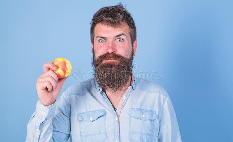 Las manzanas de amor sirvo al inconformista hermoso con la barba larga que come la manzana Las mordeduras hambrientas del inconfo imagen de archivo
