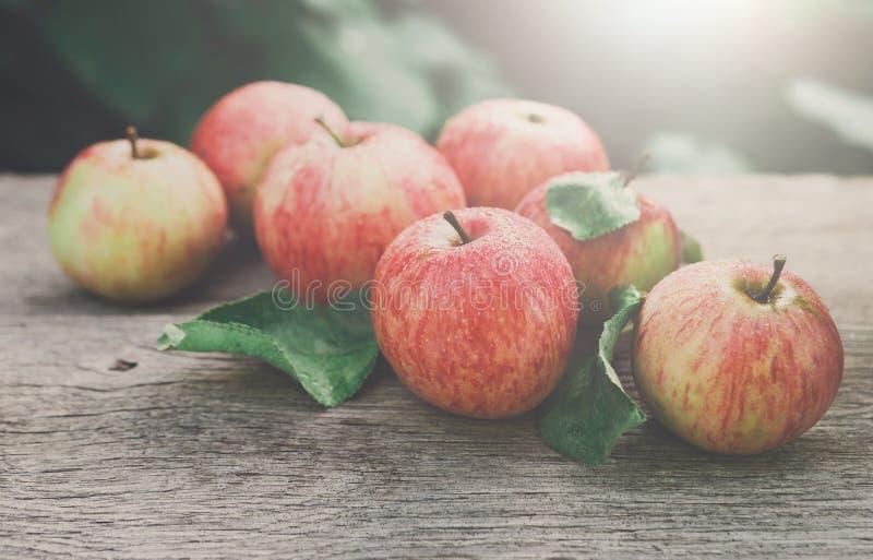 Las manzanas rojas y amarillas cosechan en jardín de la caída imagen de archivo libre de regalías