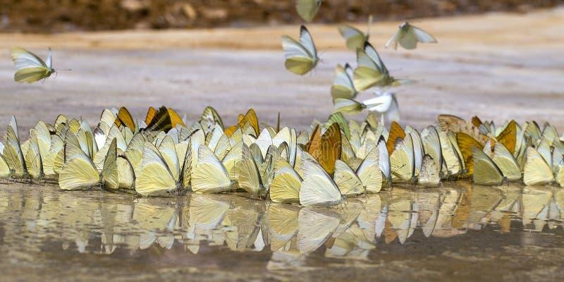 Las mariposas aparecen temprano en el verano fotos de archivo libres de regalías