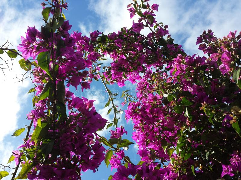 Las mejores flores fotos de archivo