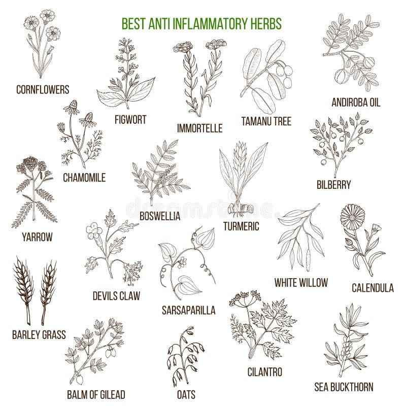 Las mejores hierbas antiinflamatorias stock de ilustración
