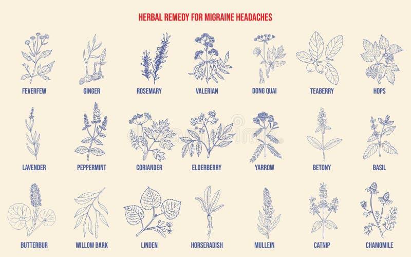 Las mejores hierbas medicinales para el alivio de las jaquecas stock de ilustración