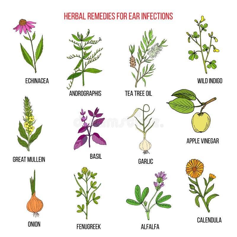 las mejores hierbas medicinales para las infecciones del