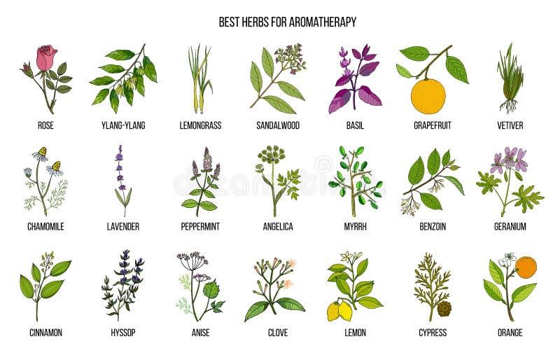 Las mejores hierbas para el aromatherapy ilustración del vector