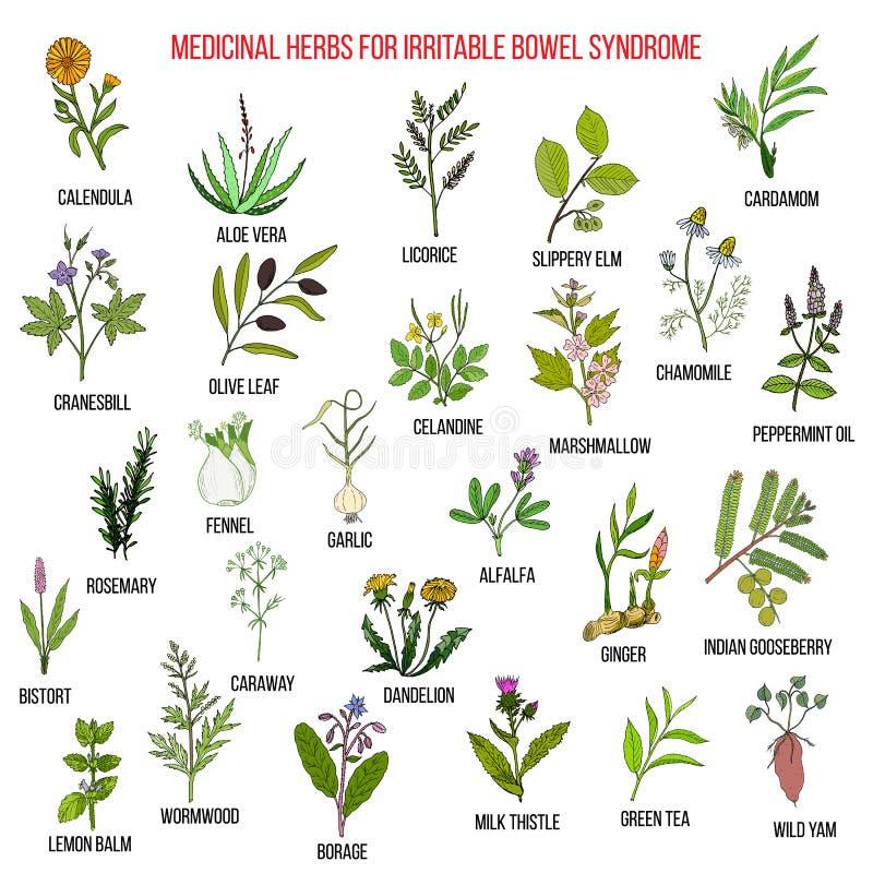 Las mejores hierbas para el síndrome de intestino irritable IBS ilustración del vector