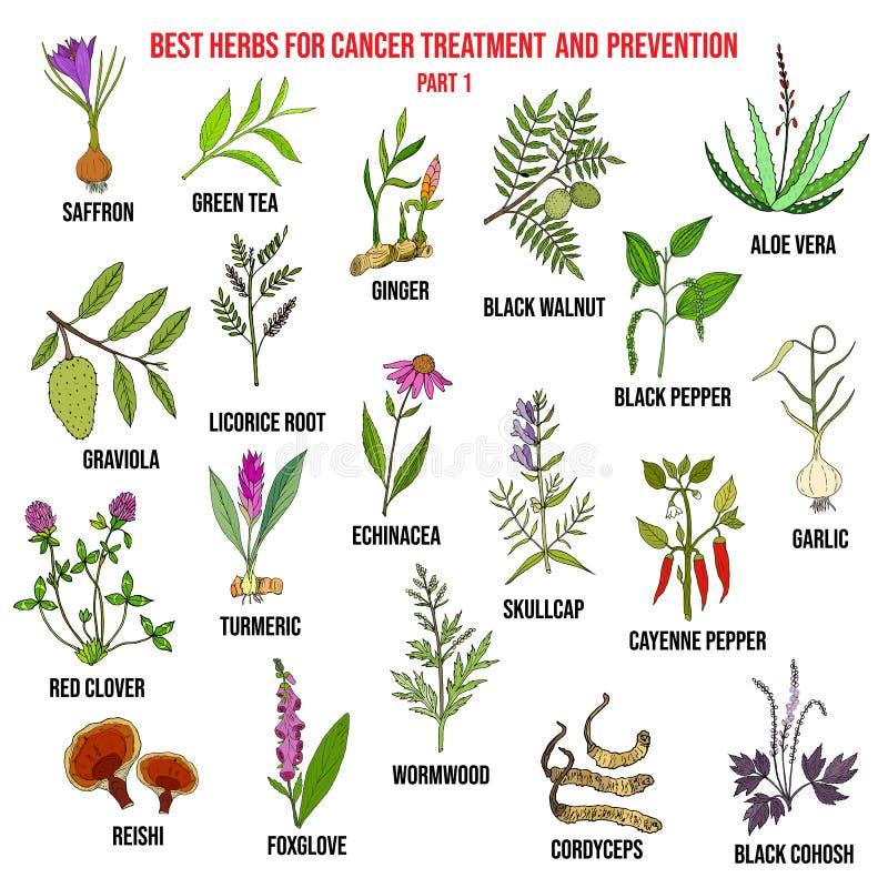 Las mejores hierbas para el tratamiento contra el cáncer y la prevención stock de ilustración
