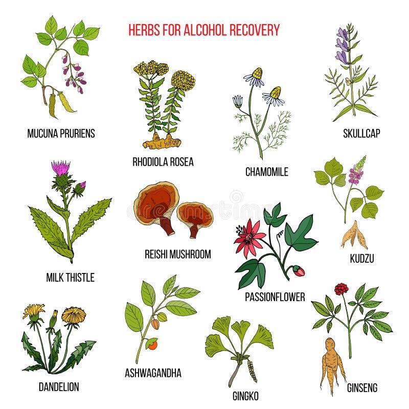 Las mejores hierbas para la recuperación de la adicción al alcohol stock de ilustración