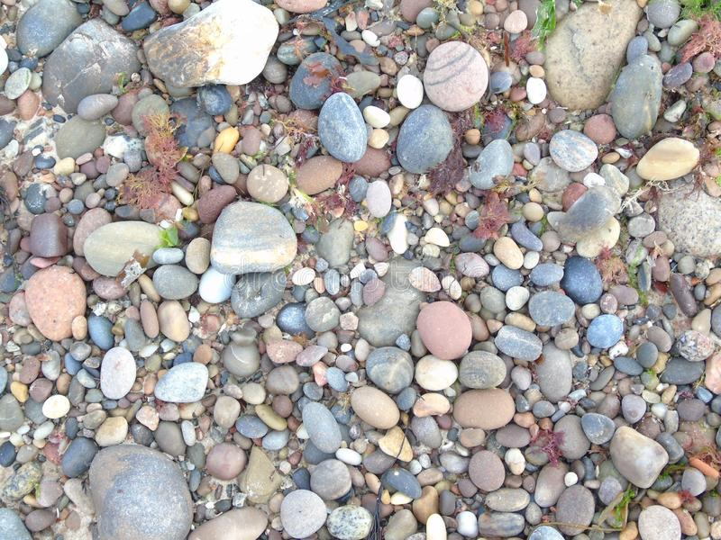 Las mentiras de la alga marina se lavaron para arriba en medio de los pequeños guijarros y piedras entre la arena mojada de a al  fotos de archivo