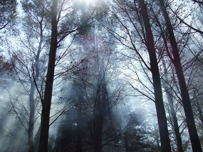 las mgła. obrazy stock