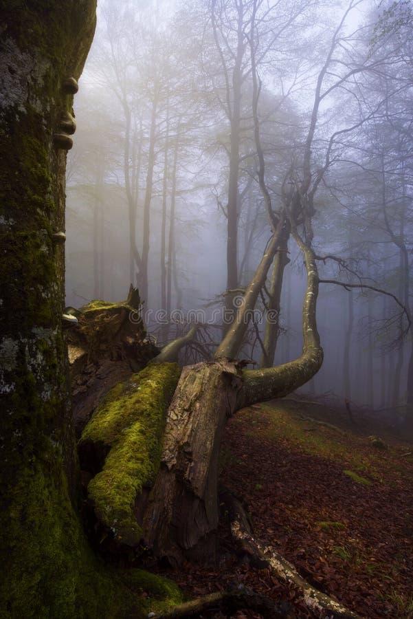 las mgła obraz royalty free