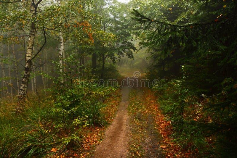 Las, mgła, droga, deszcz, drzewa, liście, lasowa trasa, jesień, ścieżka obraz stock