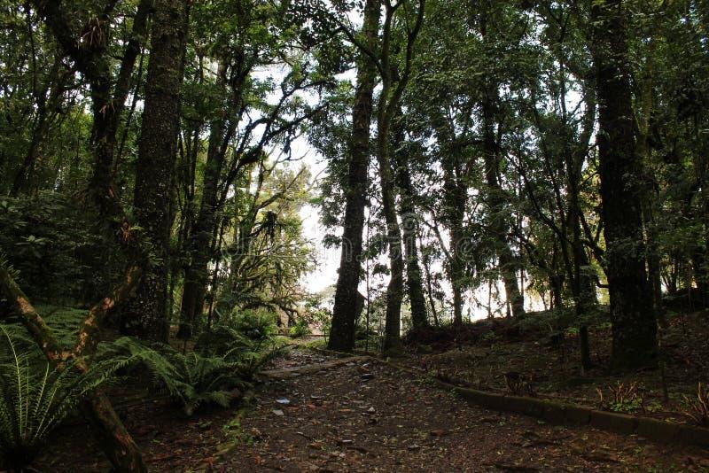 las miastowy obraz stock