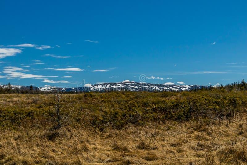 Las montañas de la gama larga de Berryhill acumulan, Gros Morne National Pa fotografía de archivo