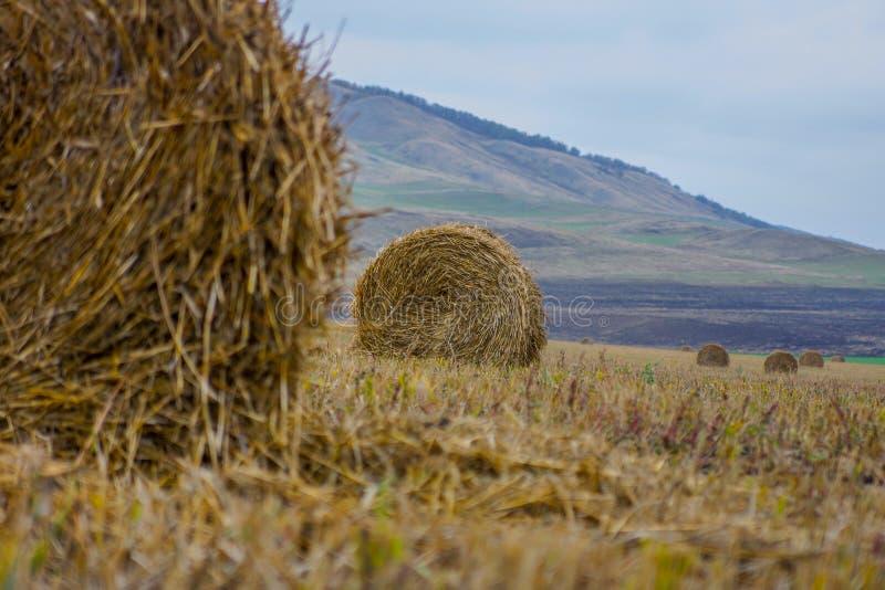 Las montañas de la hierba del amarillo de la pila del heno del otoño en la distancia ajardinan fotografía de archivo