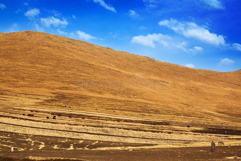 Las montañas, el pastor y los animales hermosos de Drakensberg del paisaje del valle de la montaña reúnen en el pasto, viaje de L fotografía de archivo