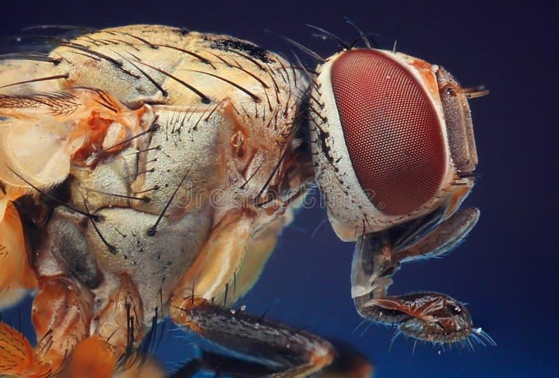 Las moscas se cierran encima del detalle fotografía de archivo
