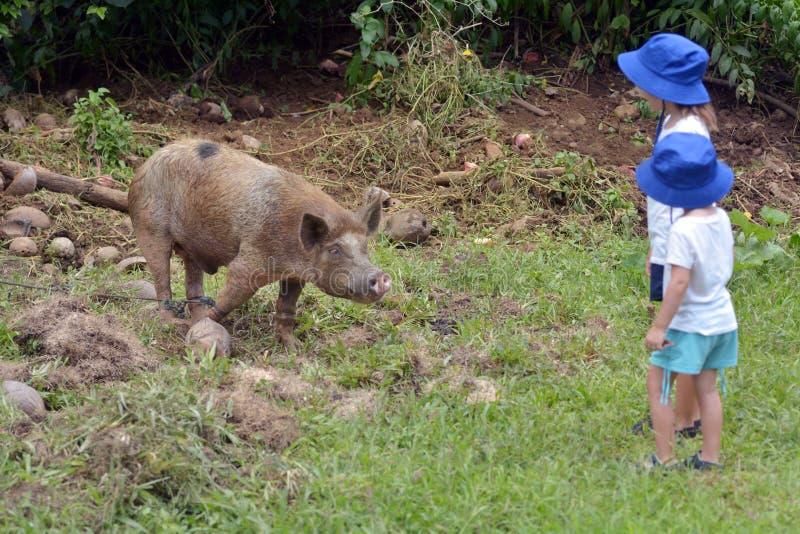 Las muchachas jovenes de la hermana miran un cerdo femenino domesticado foto de archivo