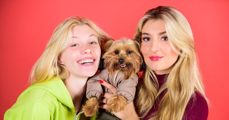 Las mujeres abrazan el terrier de Yorkshire El terrier de Yorkshire es el perro cariñoso muy cariñoso que anhela la atención Perr foto de archivo libre de regalías
