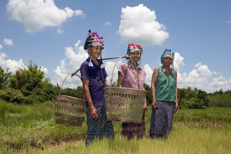 Las mujeres asiáticas en el arroz colocan, Akha fotografía de archivo libre de regalías