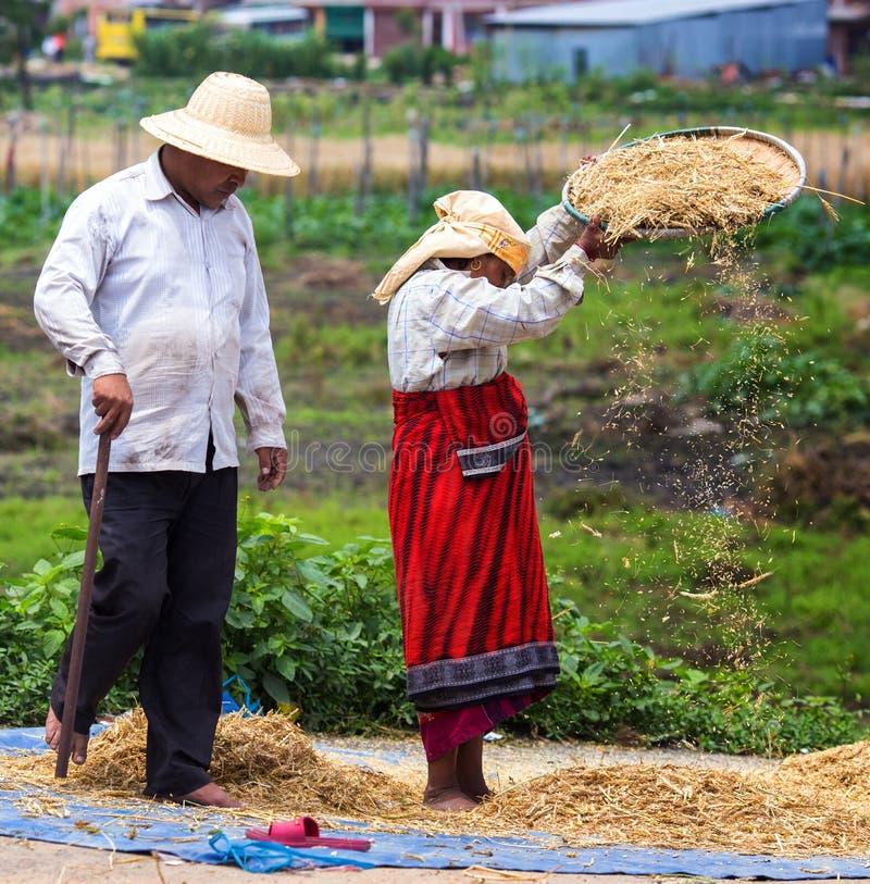 Las mujeres avientan el arroz fotografía de archivo libre de regalías