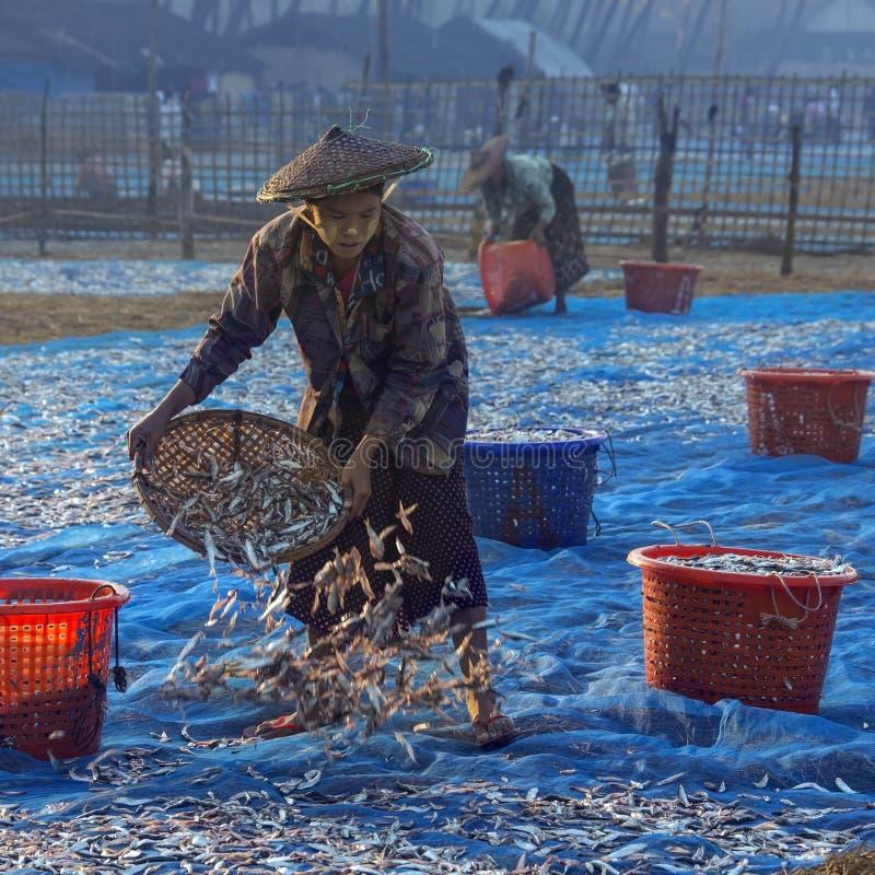 Pueblo pesquero en la playa de Ngapali - Myanmar foto de archivo libre de regalías