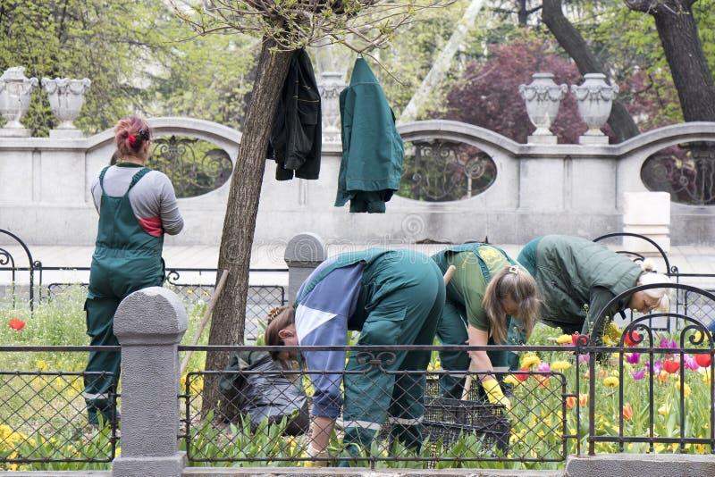 Las mujeres de jardines de flores que mantienen del servicio del verdor de la ciudad son estación de primavera fotografía de archivo