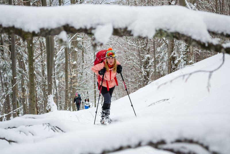 Las mujeres esquían viajando, el último invierno - primavera temprana, en las montañas cárpatas, Rumania Muchachas con los esquís imagen de archivo libre de regalías
