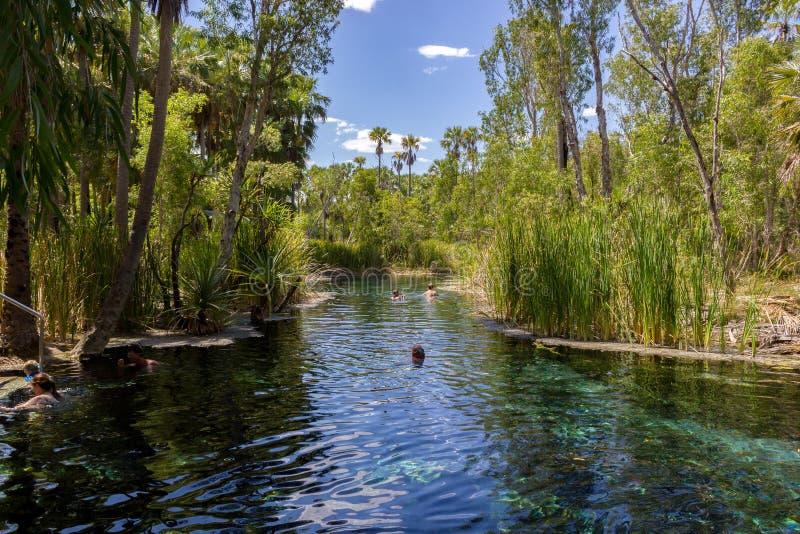 las mujeres jovenes están nadando en aguas termales del mataranka en el río del waterhouse, mataranka, Territorio del Norte, Aust fotografía de archivo libre de regalías