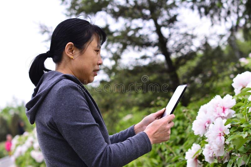 Las mujeres utilizan los teléfonos móviles para tomar imágenes de flores fotos de archivo libres de regalías