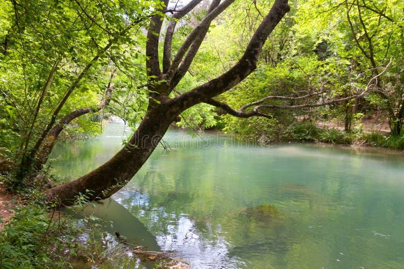 las nad rzecznym drzewem zdjęcie stock