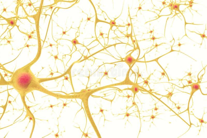 Las neuronas en el sistema nervioso humano con el efecto de la profundidad colocan ilustración 3d en un fondo blanco imagen de archivo